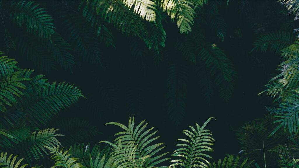 Jungle Zoom background