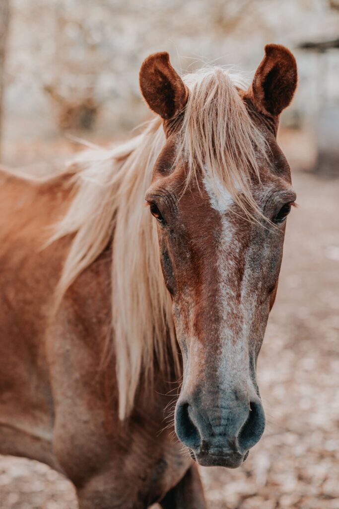 Horses like the ones that can be found in Jacksonville at a ranch